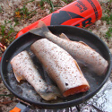 Rainbow trout in the pan
